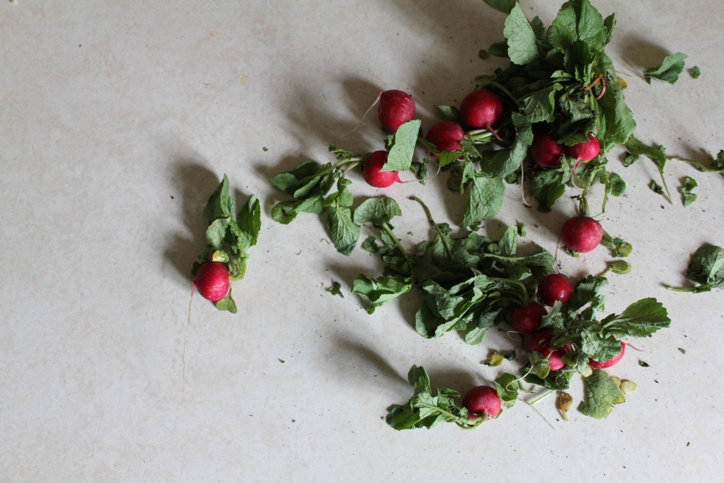 Chickpea Summer15 - Dirty radishes (P. Rose)